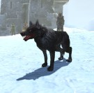 Black_Khitan_Wolf_Pup
