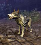 Cimmerian_Wolf