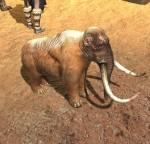 Mammoth_Calf