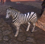 Zebra_Foal